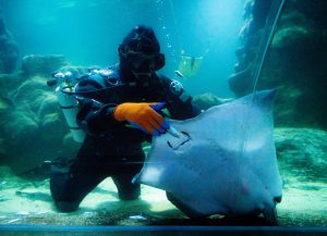 Aquarium Life: How We Keep Our Animals Safe & Healthy